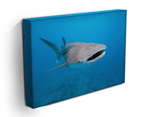 Whale shark Canvas Print or Poster - Canvas Art Rocks - 3