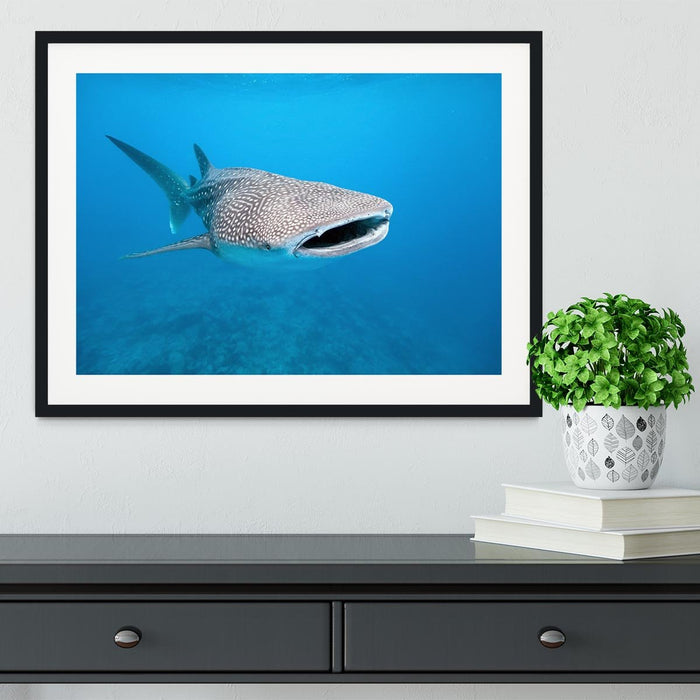 Whale shark Framed Print