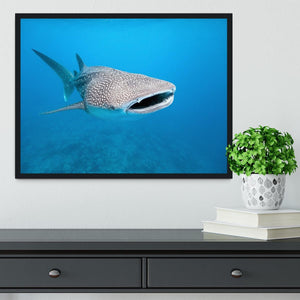 Whale shark Framed Print - Canvas Art Rocks - 2