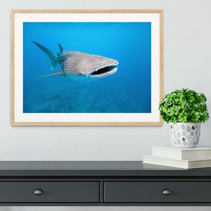 Whale shark Framed Print - Canvas Art Rocks - 3
