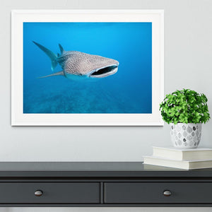 Whale shark Framed Print - Canvas Art Rocks - 5
