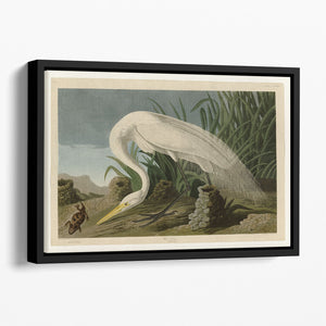White Heron by Audubon Floating Framed Canvas