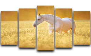 White Orlov trotter horse in rye 5 Split Panel Canvas - Canvas Art Rocks - 1