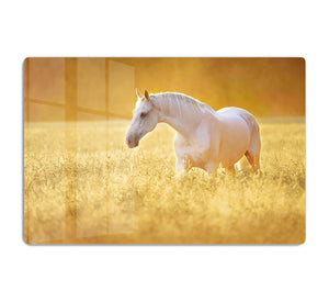 White Orlov trotter horse in rye HD Metal Print - Canvas Art Rocks - 1