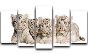 White Tiger cubs 2 months 5 Split Panel Canvas - Canvas Art Rocks - 1