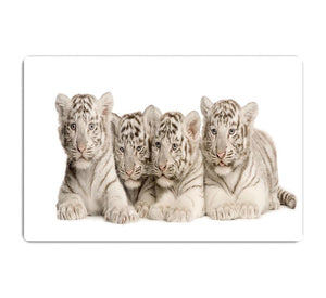 White Tiger cubs 2 months HD Metal Print - Canvas Art Rocks - 1
