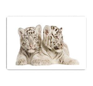 White Tiger cubs HD Metal Print - Canvas Art Rocks - 1