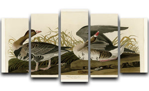 White fronted Goose by Audubon 5 Split Panel Canvas - Canvas Art Rocks - 1