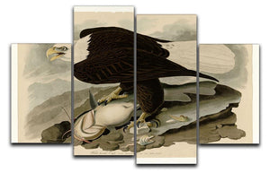 White headed Eagle by Audubon 4 Split Panel Canvas - Canvas Art Rocks - 1