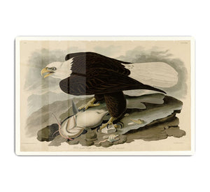 White headed Eagle by Audubon HD Metal Print - Canvas Art Rocks - 1