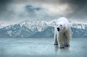 White polar bear on the ice Wall Mural Wallpaper - Canvas Art Rocks - 1