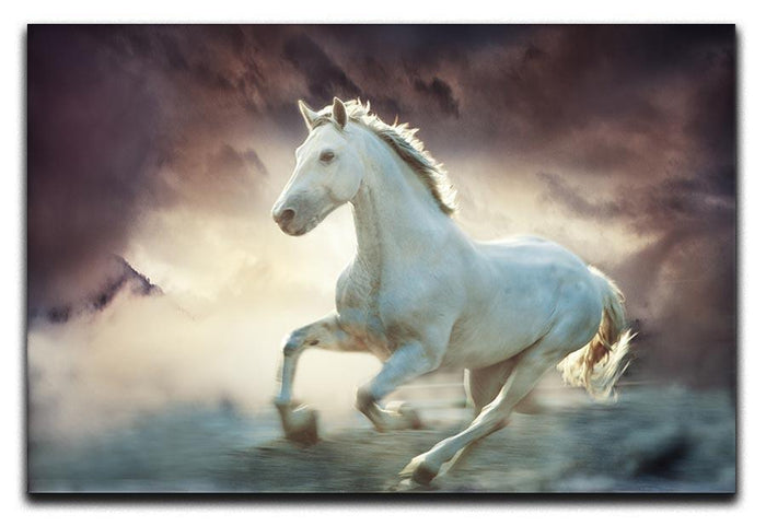 White running horse Canvas Print or Poster
