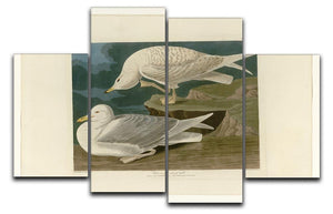White winged silvery Gull by Audubon 4 Split Panel Canvas - Canvas Art Rocks - 1
