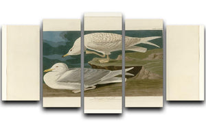 White winged silvery Gull by Audubon 5 Split Panel Canvas - Canvas Art Rocks - 1