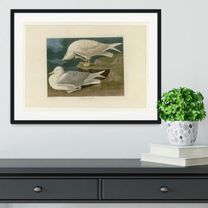 White winged silvery Gull by Audubon Framed Print - Canvas Art Rocks - 1