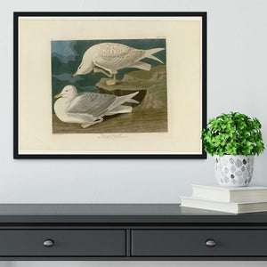 White winged silvery Gull by Audubon Framed Print - Canvas Art Rocks - 2