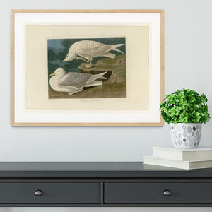 White winged silvery Gull by Audubon Framed Print - Canvas Art Rocks - 3