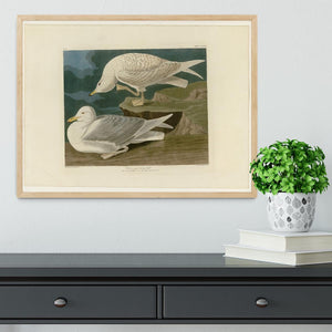 White winged silvery Gull by Audubon Framed Print - Canvas Art Rocks - 4