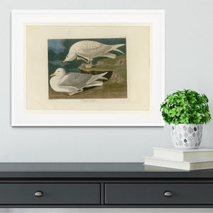 White winged silvery Gull by Audubon Framed Print - Canvas Art Rocks - 5