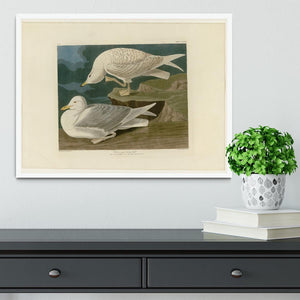 White winged silvery Gull by Audubon Framed Print - Canvas Art Rocks -6