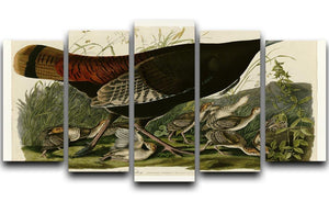 Wild Turkey 2 by Audubon 5 Split Panel Canvas - Canvas Art Rocks - 1