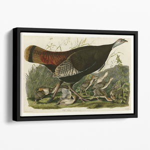 Wild Turkey 2 by Audubon Floating Framed Canvas