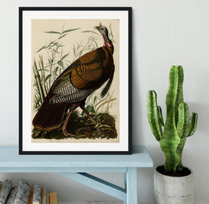 Wild Turkey by Audubon Framed Print - Canvas Art Rocks - 1