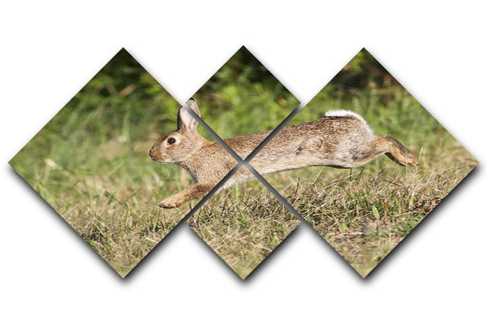Wild cute rabbit is jumping on meadow 4 Square Multi Panel Canvas