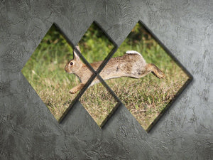 Wild cute rabbit is jumping on meadow 4 Square Multi Panel Canvas - Canvas Art Rocks - 2