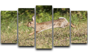 Wild cute rabbit is jumping on meadow 5 Split Panel Canvas - Canvas Art Rocks - 1