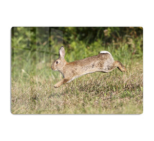 Wild cute rabbit is jumping on meadow HD Metal Print - Canvas Art Rocks - 1