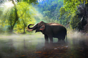 Wild elephant in the beautiful forest Wall Mural Wallpaper - Canvas Art Rocks - 1
