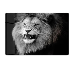 Wild lion portrait in black and white. HD Metal Print - Canvas Art Rocks - 1