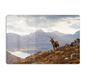 Wild stag overlooking Loch Torridon HD Metal Print - Canvas Art Rocks - 1