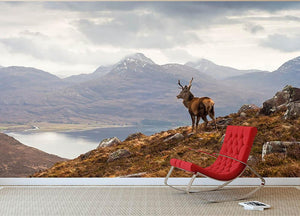 Wild stag overlooking Loch Torridon Wall Mural Wallpaper - Canvas Art Rocks - 2