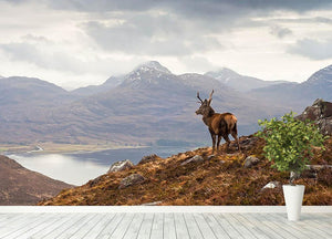 Wild stag overlooking Loch Torridon Wall Mural Wallpaper - Canvas Art Rocks - 4