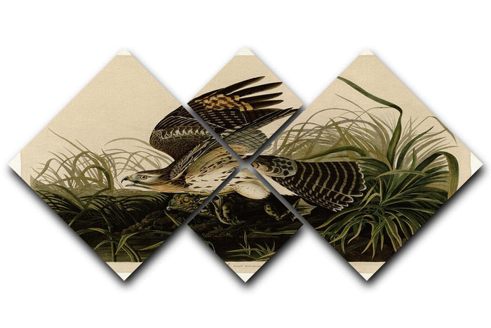 Winter Hawk by Audubon 4 Square Multi Panel Canvas