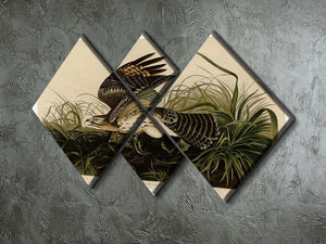 Winter Hawk by Audubon 4 Square Multi Panel Canvas - Canvas Art Rocks - 2