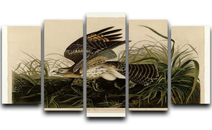 Winter Hawk by Audubon 5 Split Panel Canvas - Canvas Art Rocks - 1