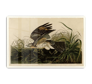 Winter Hawk by Audubon HD Metal Print - Canvas Art Rocks - 1