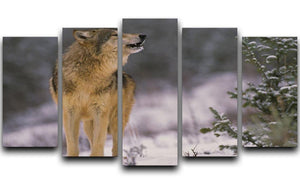 Wolf Howling in Snow 5 Split Panel Canvas - Canvas Art Rocks - 1