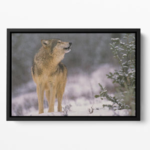 Wolf Howling in Snow Floating Framed Canvas - Canvas Art Rocks - 2