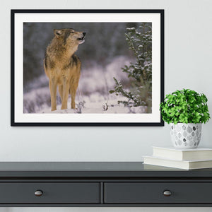 Wolf Howling in Snow Framed Print - Canvas Art Rocks - 1