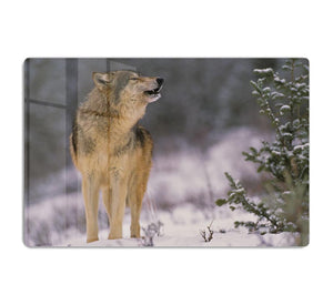 Wolf Howling in Snow HD Metal Print - Canvas Art Rocks - 1