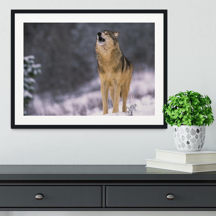 Wolf Howling in White Snow Framed Print
