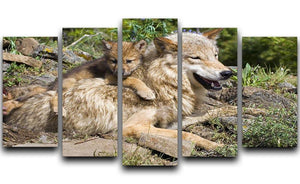 Wolf cubs and mother at den site 5 Split Panel Canvas - Canvas Art Rocks - 1