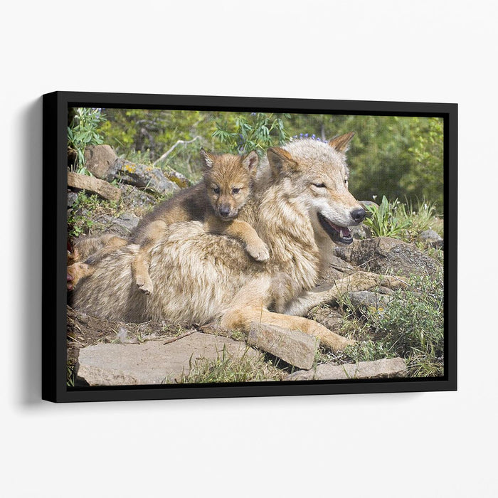 Wolf cubs and mother at den site Floating Framed Canvas