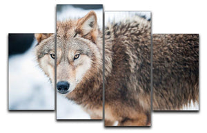 Wolf standing in the snow 4 Split Panel Canvas - Canvas Art Rocks - 1