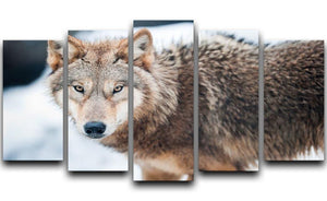 Wolf standing in the snow 5 Split Panel Canvas - Canvas Art Rocks - 1