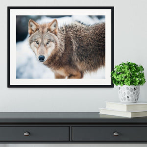 Wolf standing in the snow Framed Print - Canvas Art Rocks - 1
